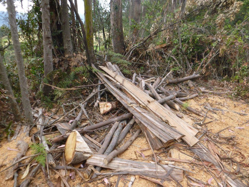 CAR lanza alerta por irregularidades en tala de árboles en Cundinamarca