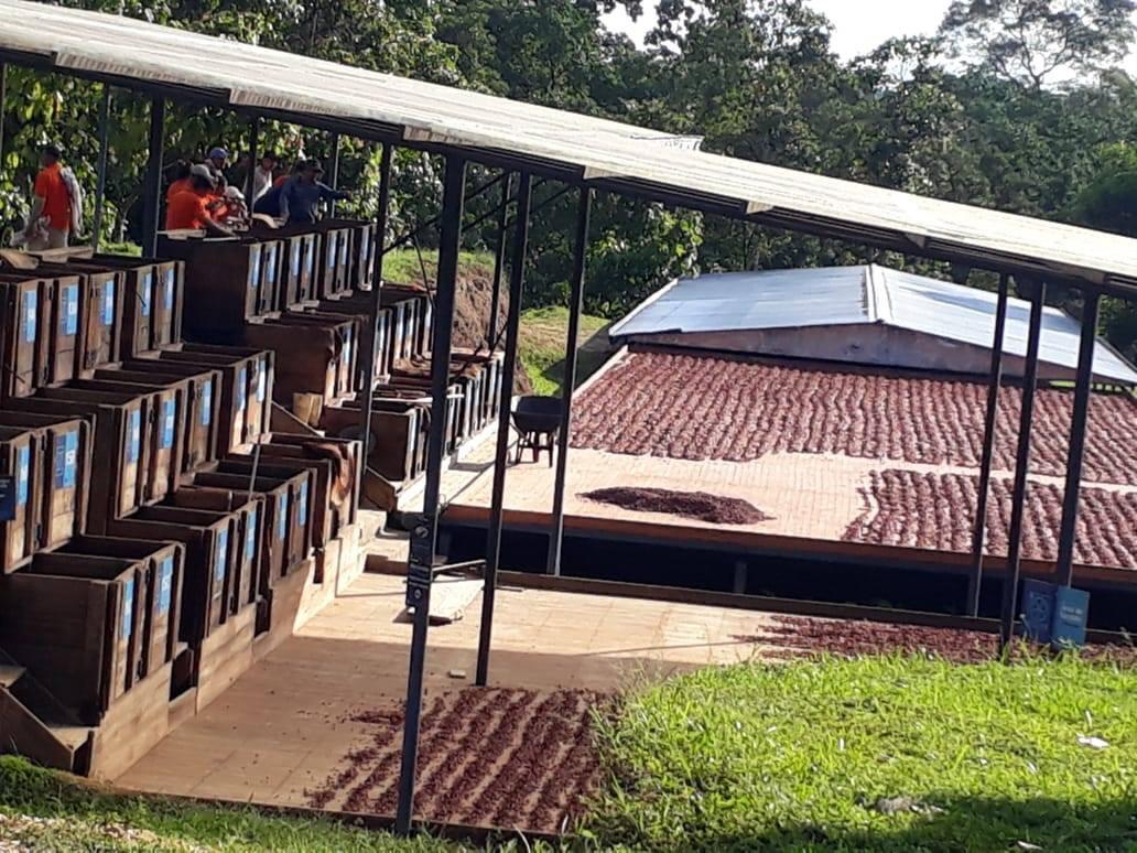Tres plantas procesadoras de cacao a punto de ser realidad en el norte del Tolima.