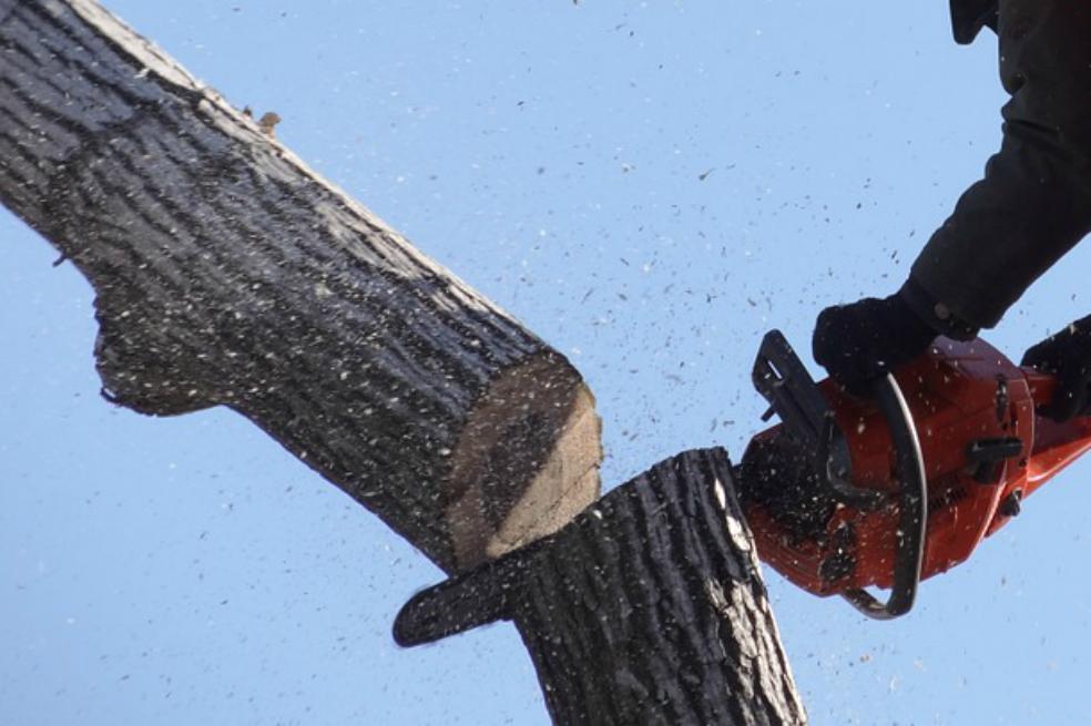 Capturan 19 personas dedicadas a la tala ilegal de árboles en Cundinamarca