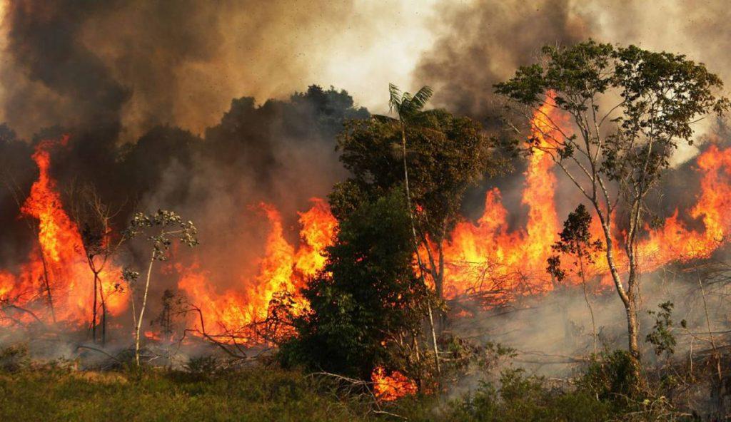#PrayForAmazonía: el pulmón del mundo se está quemando y nadie interviene