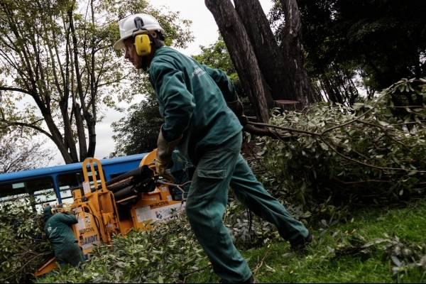 Alcaldía advierte por caída de árboles durante temporada de lluvias