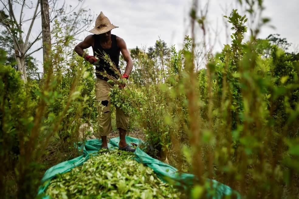 Colombia sigue siendo el mayor cultivador de hoja de coca pese a leve reducción en 2018