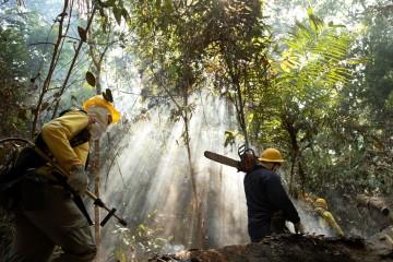 Tres capturados por incendios en el Amazonas brasilero