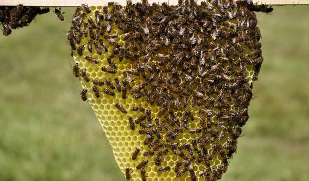 ¿Por qué están muriendo las abejas en Colombia?
