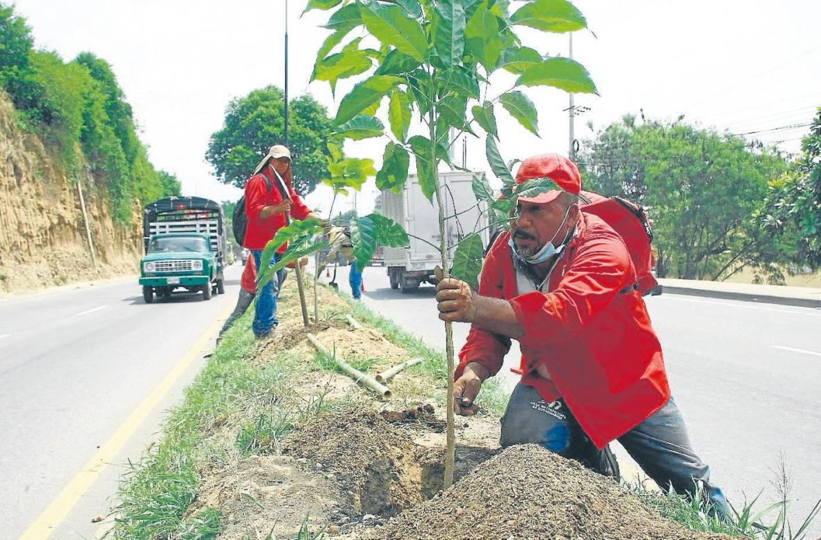 ¿Qué hará Bucaramanga ante la falta de más de 100 mil árboles?