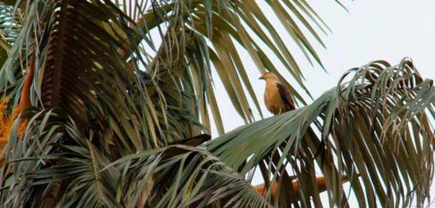 Minambiente invita a protejer la naturaleza en Semana Santa