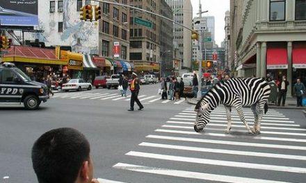 Campaña para proteger animales silvestres en vías del país