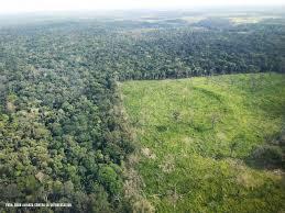 Aumenta deforestación en la Amazonía