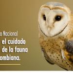 Gobierno invita a participar en el #ClubDeVidaEnLaVía, campaña para prevenir el atropellamiento de fauna silvestre