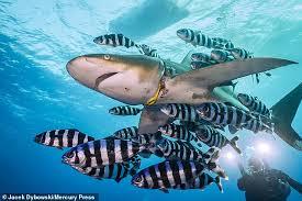 """Los tiburones de las costas de Reino Unido """"comen"""" plásticos y fibras artificiales"""