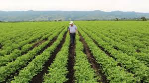 Proyecto de ley para aliviar obligaciones financieras a cerca de 140.000 productores, fue radicado