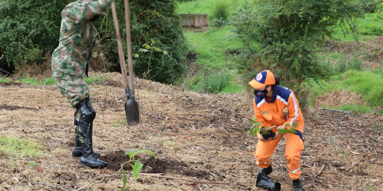 Reforestación en la Quebrada Tìquiza de Chía