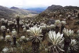 Anuncian reapertura gradual de ocho parques naturales del país