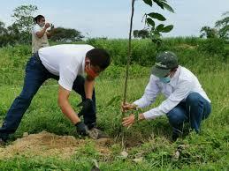 Ecopetrol plantará seis millones de árboles en los próximos dos años