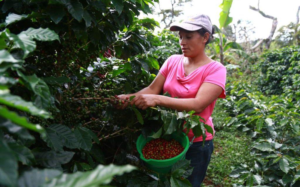 SENA apoya a las mujeres del campo y conmemora del 'Día Internacional de la Mujer Rural'