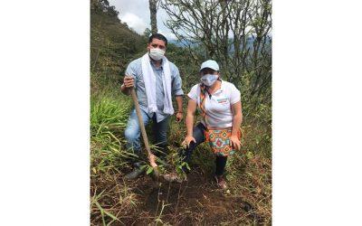 Cuarenta mil árboles para los ecosistemas de Cundinamarca