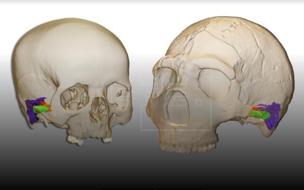 Los neandertales también tenían la capacidad de hablar