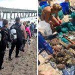 Sacan más de 700 kilos de basura del mar, record mundial